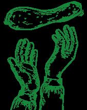 le-pinse-ancona